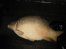 sorry about the pic - 45 lb mirror - May 2011