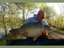 Karl swim 3 with The Mole - 57 lb  - April 2017